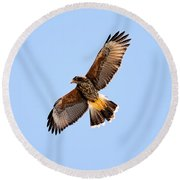 Round Beach Towel featuring the photograph Harris's Hawk H37 by Mark Myhaver