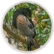 Round Beach Towel featuring the photograph Harris's Preening V09 by Mark Myhaver