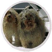 Havanese Dogs Round Beach Towel by Sally Weigand