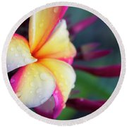 Round Beach Towel featuring the photograph Hawaii Plumeria Flower Jewels by Sharon Mau