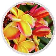 Hawaii Plumeria Flowers In Bloom Round Beach Towel