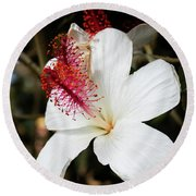 Round Beach Towel featuring the photograph Hawaiian Hibiscus  by Joann Copeland-Paul