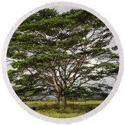 Hawaiian Moluccan Albizia Tree Round Beach Towel