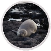 Hawaiian Monk Seal Round Beach Towel