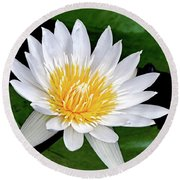 Hawaiian White Water Lily Round Beach Towel