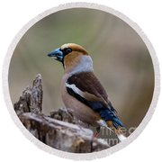 Hawfinch Perching Round Beach Towel by Torbjorn Swenelius
