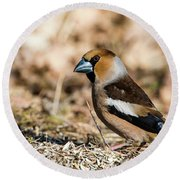 Round Beach Towel featuring the photograph Hawfinch's Gaze by Torbjorn Swenelius