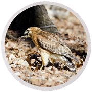 Round Beach Towel featuring the photograph Hawk And Gecko by George Randy Bass