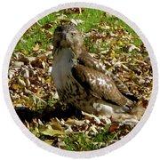 Hawk Falling Leaves Round Beach Towel