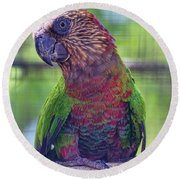 Hawk-headed Parrot Round Beach Towel