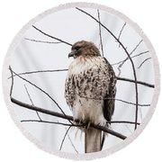 Hawk On Alert Round Beach Towel