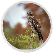 Red Shoulder Hawk Profile Round Beach Towel