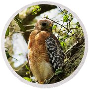 Hawk Taking A Rest On A Tree In Lakeland Florida Round Beach Towel