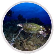 Hawksbill Turtle Swimming With Diver Round Beach Towel