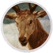 Head Of A Stag Round Beach Towel