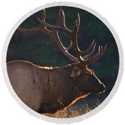 Head Of The Herd Round Beach Towel