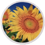 Round Beach Towel featuring the photograph Heading For Gold by Chris Berry