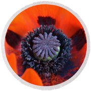 Heart Of The Poppy  Round Beach Towel