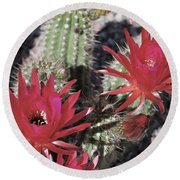 Hedgehog Cactus Round Beach Towel