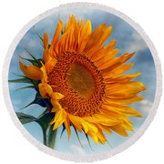 Helianthus Annuus Greeting The Sun Round Beach Towel