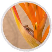 Heliconia And Frog Round Beach Towel