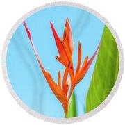 Heliconia Flower Round Beach Towel