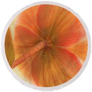 Round Beach Towel featuring the photograph Hellebore by Bob Cournoyer