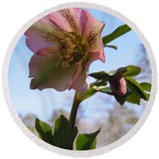 Hellebore Morning Round Beach Towel
