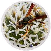 Hello, Wasp Round Beach Towel