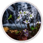 Round Beach Towel featuring the photograph Hepatica And Waterfall by Thomas R Fletcher