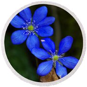 Hepatica Nobilis Round Beach Towel