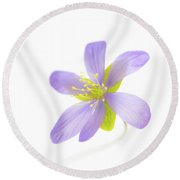 Hepatica On White Round Beach Towel