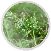 Herbs Close Up Round Beach Towel