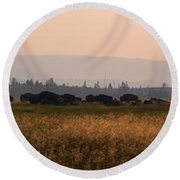 Herd Of Bison Grazing Panorama Round Beach Towel