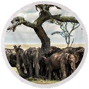 Herd Of Elephants Under A Tree In Serengeti Round Beach Towel