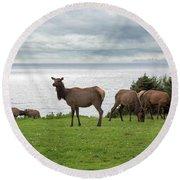 Herd Of Elk At Ecola State Park Round Beach Towel