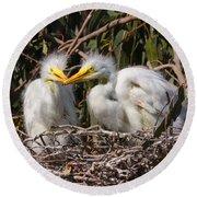 Heron Babies In Their Nest Round Beach Towel