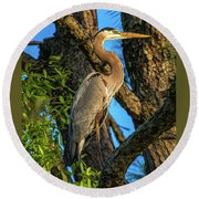 Heron In The Pine Tree Round Beach Towel