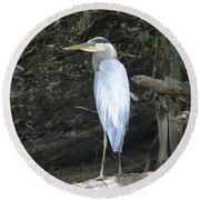 Round Beach Towel featuring the photograph Heron In The Woods by Kathy Kelly