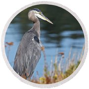 Heron On Pause Round Beach Towel