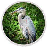 Blue Heron With An Attitude Round Beach Towel by Kathy Kelly