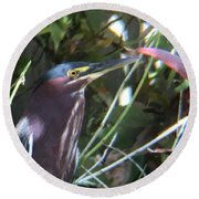 Heron With Yellow Eyes Round Beach Towel