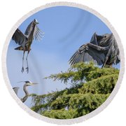 Herons Mating Dance Round Beach Towel