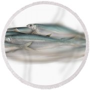 Herring School Of Fish - Clupea - Nautical Art - Seafood Art - Marine Art - Game Fish Round Beach Towel