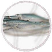 Herring School Of Fish - Clupea - Nautical Art - Seafood Art - Marine Art - Game Fish Round Beach Towel