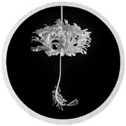 Hibiscus Schizopetalus Against A Black Background In Black And White Round Beach Towel