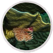 Round Beach Towel featuring the photograph Hidden Christmastree Worm by Jean Noren