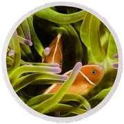 Hiding Clownfish Round Beach Towel