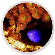Round Beach Towel featuring the photograph Hiding Damsel by Anthony Jones