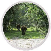 Highland Cattle In The Noordhollandse Duinreservaat Round Beach Towel